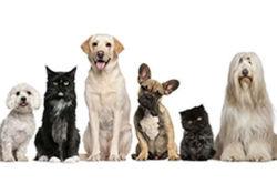Pharmacie Vétérinaire - Toulouse