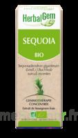 Herbalgem Séquoia Macérat bio 30ml à Toulouse