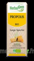 Herbalgem Propolis large spectre Solution buvable bio Fl cpte-gttes/15ml à Toulouse